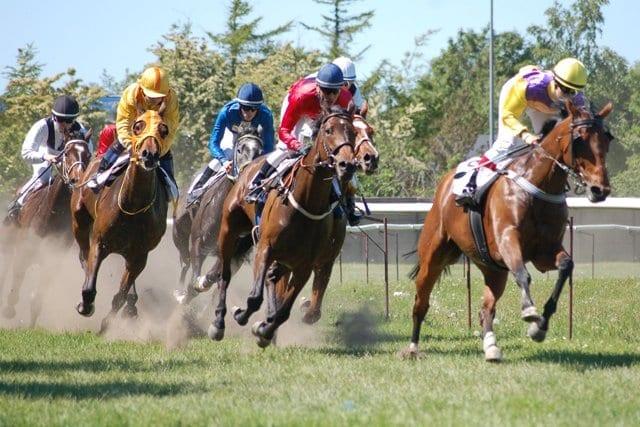 Heste-i-konkurrence