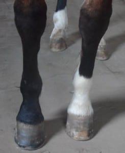 Samme hest normal optagelse