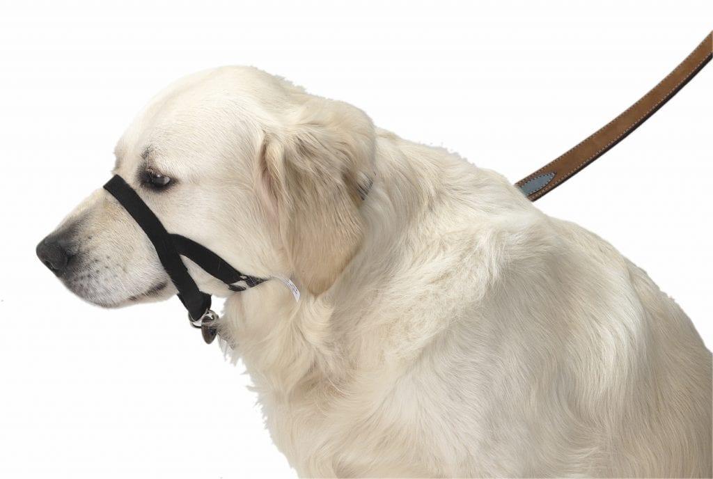 halsbånd til hunde der gør