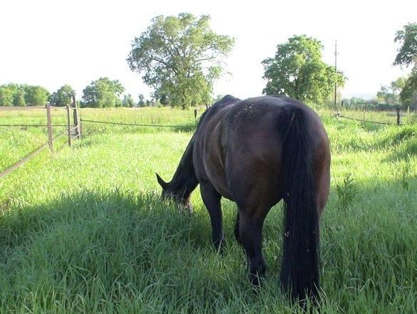 Hest diarre 1