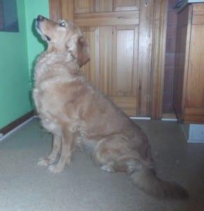 Samme hund med normal optagelse