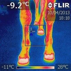 Forben af hest med infrarød optagelse