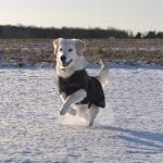 KRUUSE-Rehab-Hundedækken-softshell