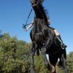 Nervesystemet/Den nervøse hest