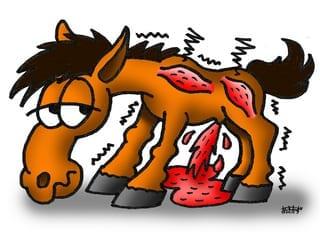 Nyreslag hest 2