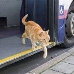 Transportbure