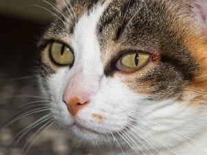 katten fælder voldsomt